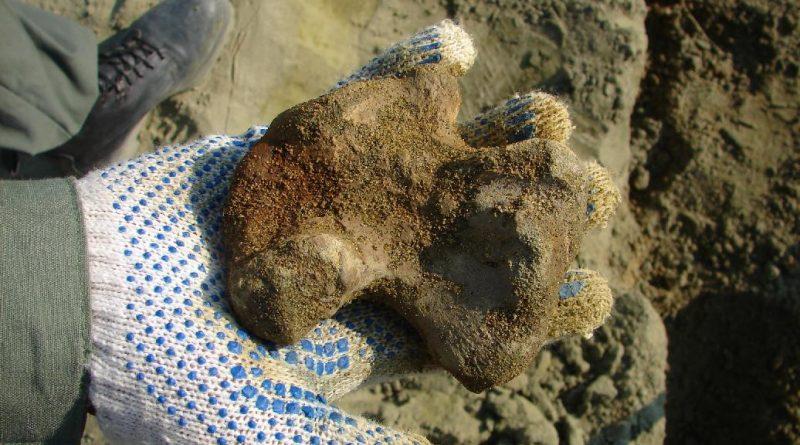 Плечевая кость мозазавра