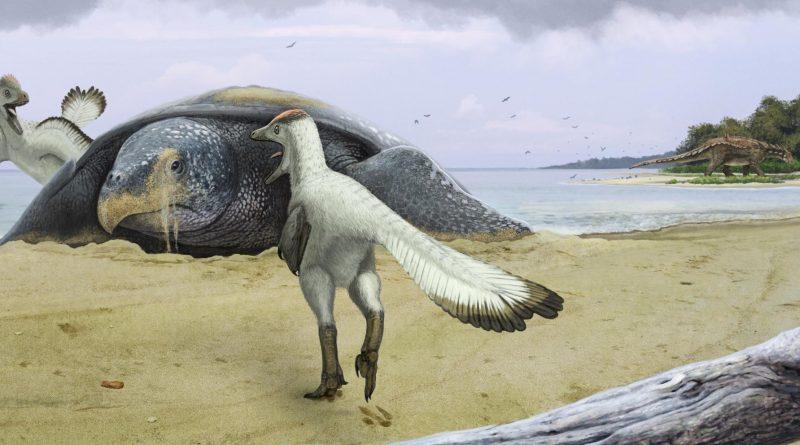 Протостега и дромеозавры