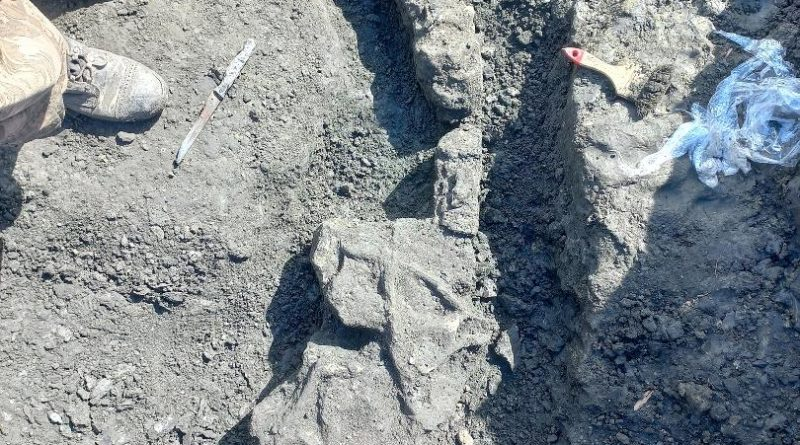 В геопарке «Ундория» обнаружено сразу два скелета ихтиозавров (1)